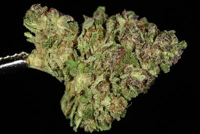 blueberry-strain-theory-800x533_opt