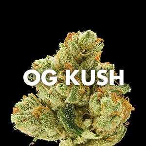 marijuana_strain_og_kush