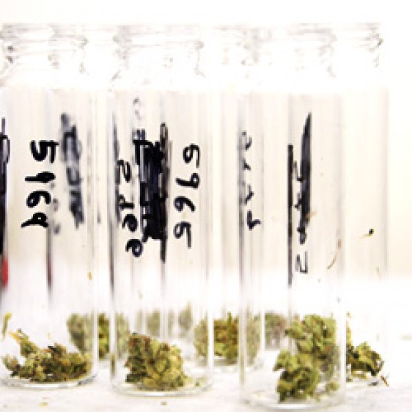 Weed Barcelona – Courses & Certificates